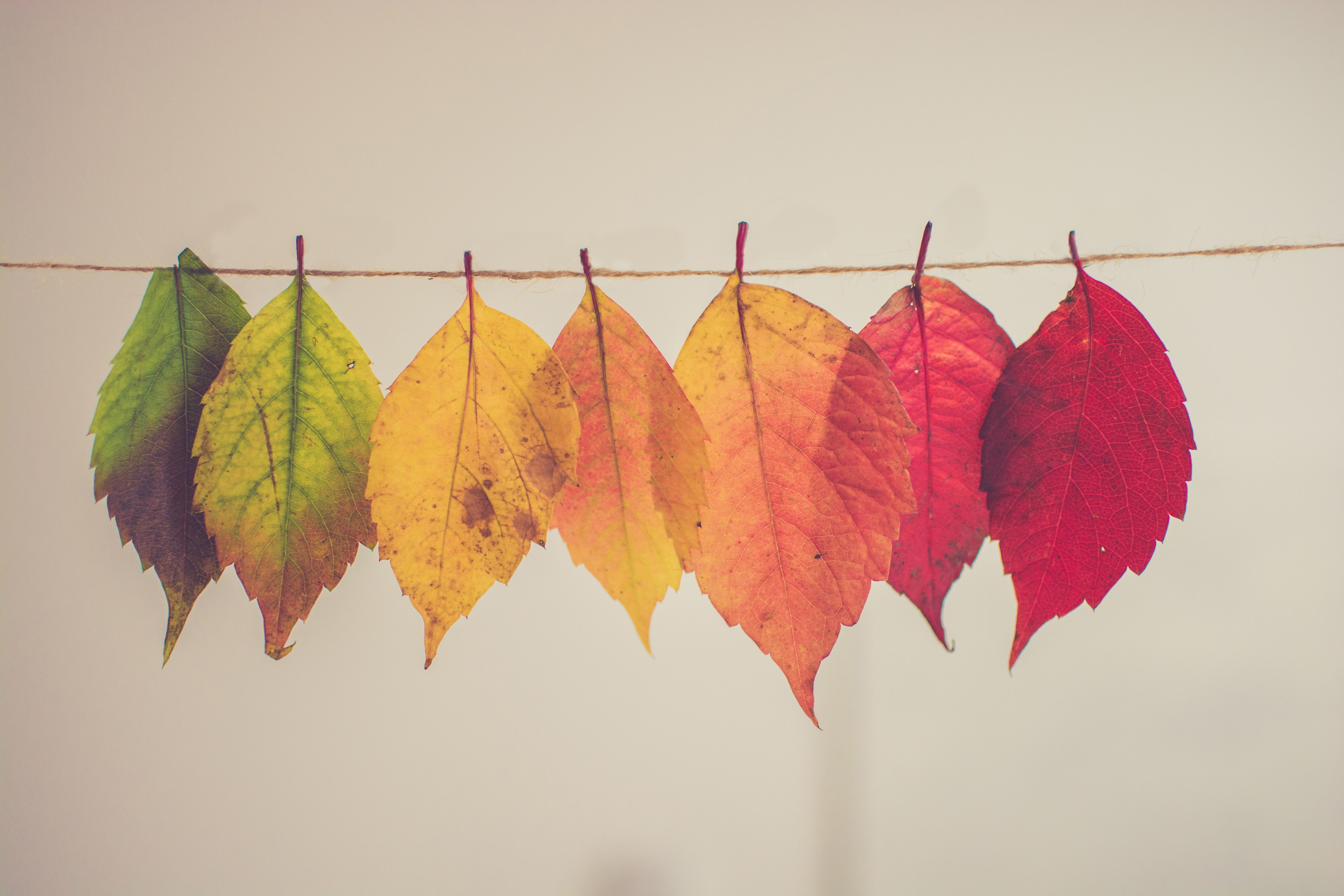 Autumn leaves hung on a string